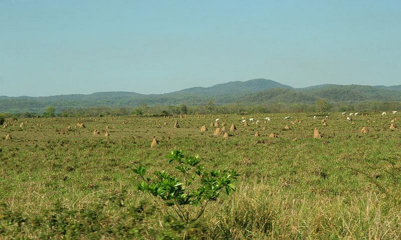 Omgeving Pantanal