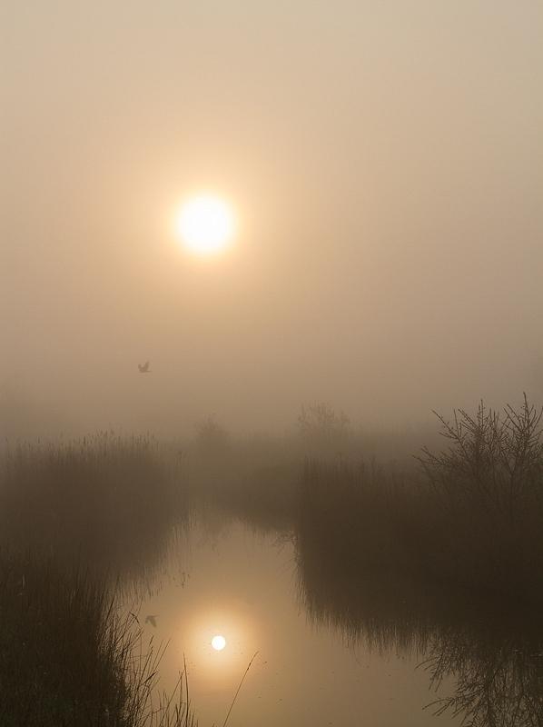 Zonsopkomst in de mist